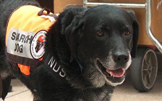 全美第一 搜救犬訓練中心落戶洛西北