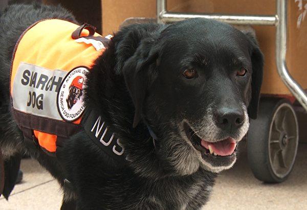 洛杉磯西北方約一個多小時車程的聖塔寶拉市(Santa Paula),在不久的將來會建有全美第一個專門訓練搜救犬的中心。(張文剛/大紀元)