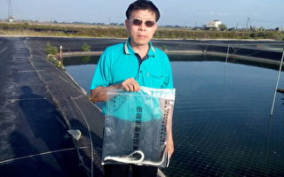 雲林業者否認鰻魚含孔雀綠 促速查明