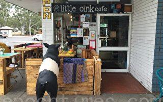 澳堪培拉咖啡馆两次被盗  社区支持暖心
