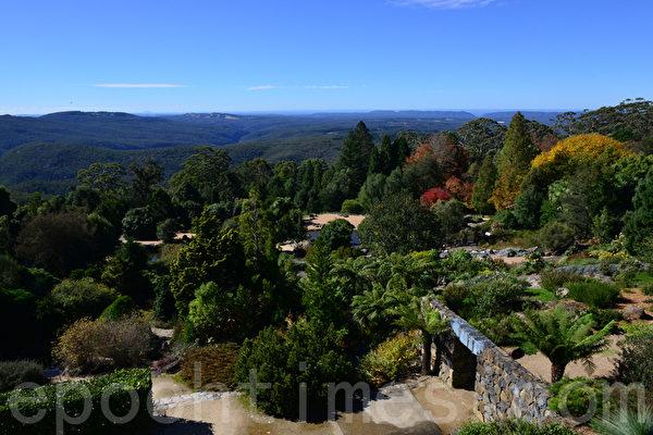 悉尼名勝--藍山,重重山巒蜿蜒秀麗,其海拔在1100米以上,峽谷深深,瀑布高懸,谷底溪水潺潺,林木蔥蘢。(華苜/大紀元)