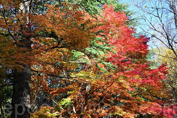 聆聽秋風刮著楓葉沙沙聲,感受這份世外的秋色。(華苜/大紀元)
