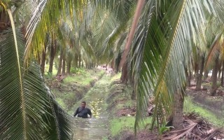 椰子妙用多 C2O代理商走访泰国工厂