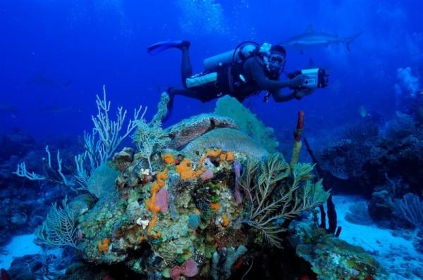 Anthony's Key绚丽的海底世界。(Anthony's Key提供)