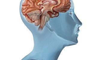 研究:比较善心的人 大脑结构不同