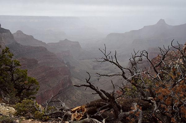 美国大峡谷北缘壮丽风光。(MLADEN ANTONOV/AFP)