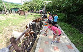 High Night乐一夏 夜宿寿山动物园开始报名