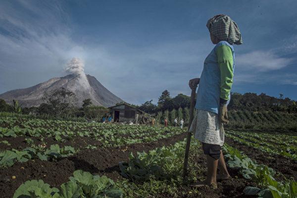 2015年6月3日,在卡罗区的印尼农民看着锡纳朋火山喷出的火山烟尘。此次锡纳朋火山爆发导致近3000人被迫撤离家园,印尼政府将其威胁级别调为最危险级。(SUTANTA ADITYA/AFP )