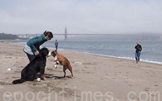 乾旱連年 加州海灘水質優