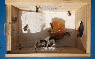 美中医师用蜂针疗法治病被告上法庭