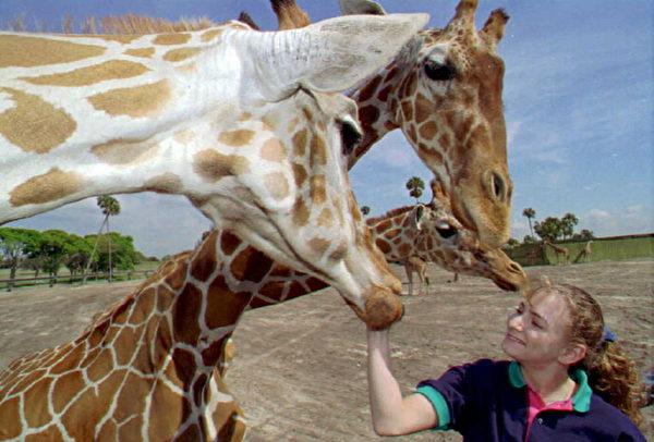 美國布希公園能與野生動物們親密接觸。(Jim TUTEN/AFP)