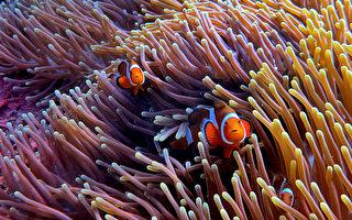 拍下小丑魚 台灣水下美景驚豔國際