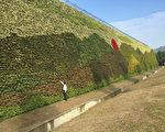 臺灣廢棄物處理業者高雄可寧衛公司打造全球最大面積綠化植生牆,高度13.8公尺,總面積實測約為2593.77平方公尺,6月29日獲吉尼斯(金氏)世界紀錄認證。(業者提供)