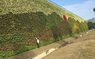 全球最大垂直花園 臺岡山創吉尼斯紀錄