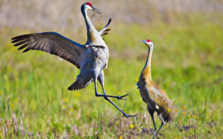 佛州小岛现异象  所有鸟类突然飞离