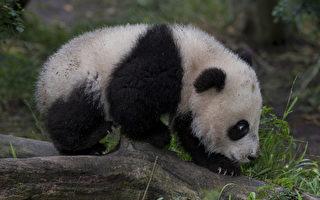 """美圣地亚哥动物园拿了""""世界第一"""""""