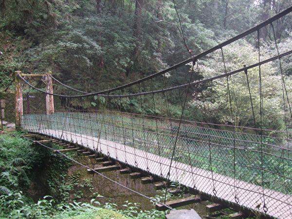 阿里山神木區吊橋。(徐煥宗/大紀元)