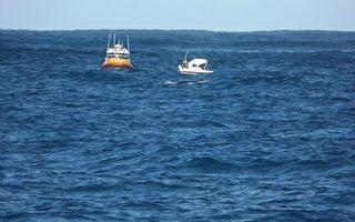 西澳观鲸:守护落难船只 海中巨人尽显人性