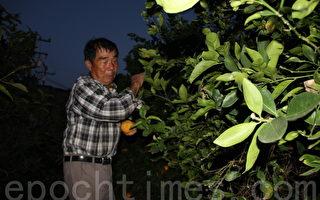水泥地裡 經濟農耕——都市裡的農夫吳龍格