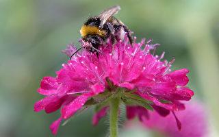 监测空气污染 蜜蜂当奇兵