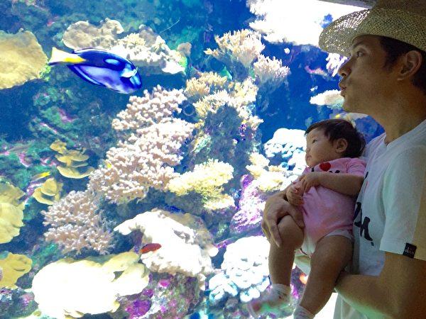 宥勝帶女兒蕾蕾觀賞漂亮的海底世界。(怡佳娛樂提供)