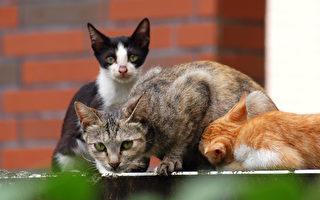 猫能识别祖母堂兄 家族关系不简单