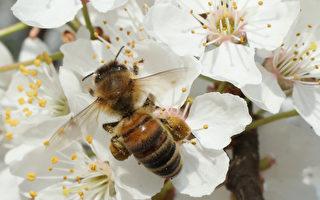 养蜂人 背后的奥秘(下)
