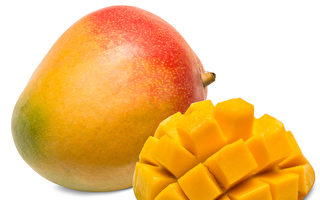 芒果提前收获 受欢迎品种月底陆续上市