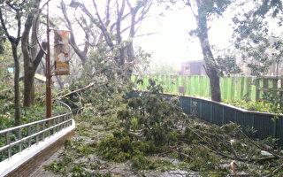 寿山动物园风灾受创 休园5天