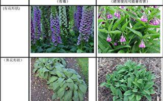 有毒后院植物警告