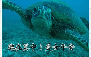 只有这才是天堂 小琉球绿蠵龟影片感人