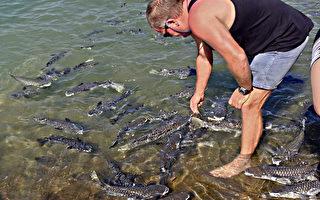 组图:澳洲达尔文海水涨潮人鱼乐