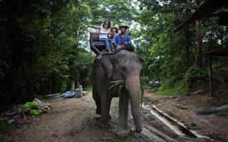 泰國大象刺死象伕「挾持」3陸客衝進森林