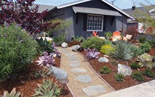 節水成加州常態 家庭園藝何處去