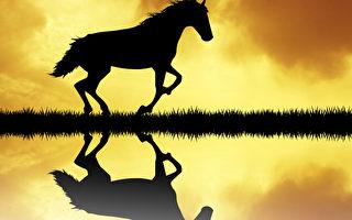 万物有灵 赤马还阳的故事