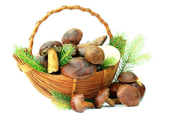 蘑菇长势好 挪威拾菇人猛增