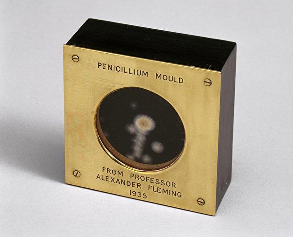 亚历山大‧弗莱明1935年拿给道格拉斯‧麦克劳德看看的青霉菌样本。(维基百科公共领域)
