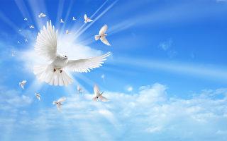 白色的鴿子在藍天,信仰的象徵(fotolia)