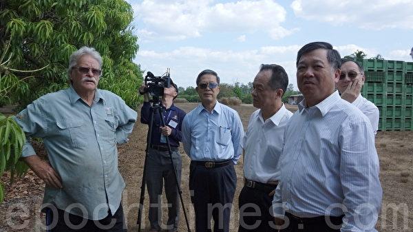 果園主人麥斯威爾帶領台灣中小企銀董事長及中鋼處長、經理們到一望無際的芒果園參觀。(林達/大紀元)