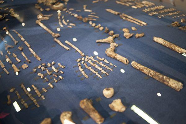 古人種化石曝光 大腦如橘子大小