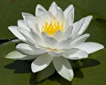 Syl Lebar 的花卉摄影 (Syl Lebar /大纪元)