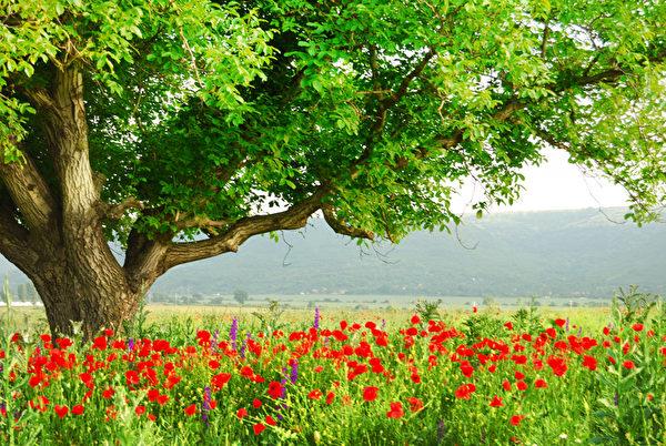 有一个健康的肝,生命就是彩色的,让生命之树常青。(Fotolia)