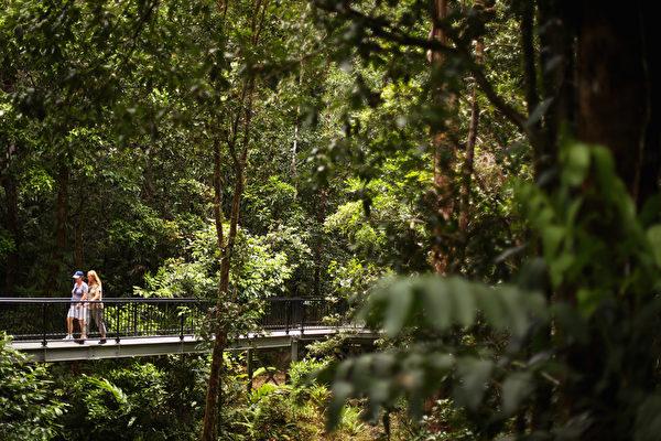 昆士兰世界遗产的原始丹翠雨林。(Mark Kolbe/Getty Images)