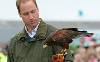 组图:威廉王子的动物之缘