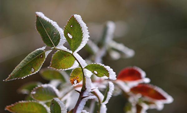 2015年10月20日,德國植物覆滿了霜。(KARL-JOSEF HILDENBRAND/AFP/Getty Images)