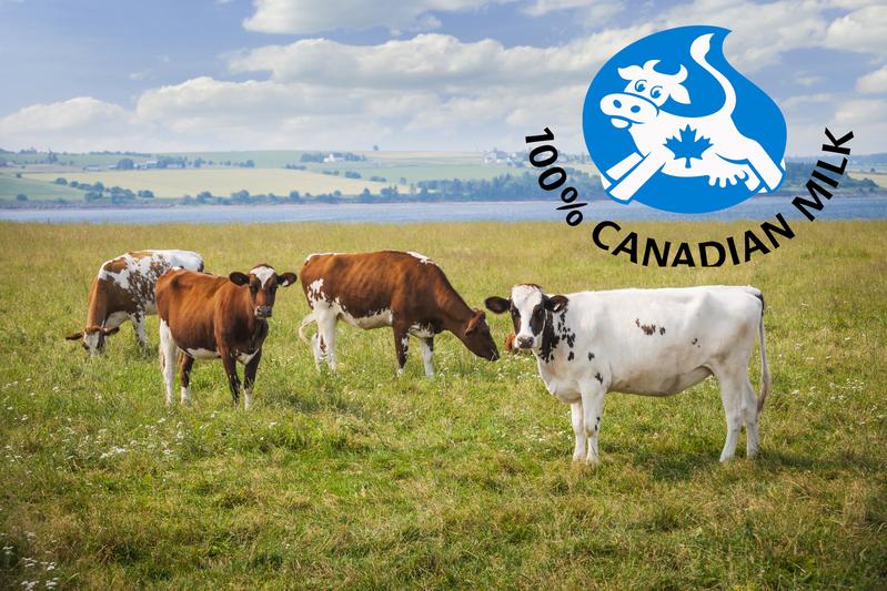 TPP或导致加拿大进口含激素牛奶  大纪元