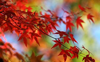 【節氣典故】立秋食俗 古人的養生智慧
