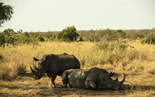 坦桑尼亞抓捕四名中國人 搜出11根犀牛角