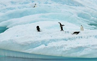 NASA:南极冰川在增多 海水上升另有他因