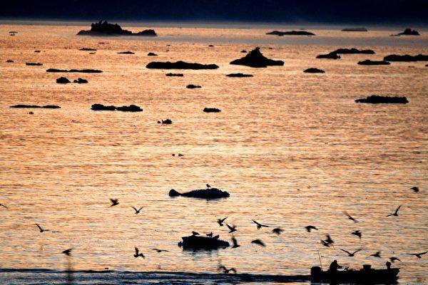 格陵蘭伊盧利薩特雅各港冰川上海鷗飛過漁船。(Uriel Sinai/Getty Images)
